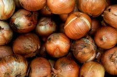 Oignons organiques (cepa d'allium) Photographie stock