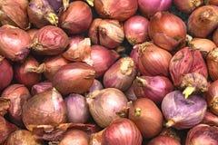 Oignons rouges Photographie stock libre de droits