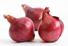 Oignons rouges (allium) Image libre de droits