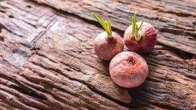 Oignons, oignons rouges avec de petites feuilles Images libres de droits