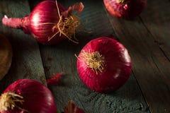 Oignons rouges organiques crus Photos libres de droits