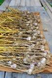 Oignons secs photo stock