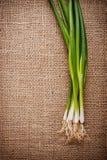 Oignons verts Photographie stock libre de droits
