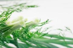 Oignons verts et aneth frais sur un fond blanc Vue avec l'espace de copie Photo libre de droits