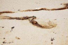 Oil on beach Stock Image