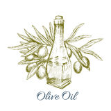 Oil bottle with olive fruits sketch poster Stock Photos