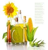 Oil bottles, corn and sunflower Stock Photo