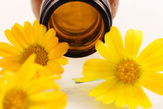 Oil from calendula flower Royalty Free Stock Photography