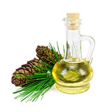 Oil Cedar With Cones Stock Photo