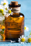 Oil of chamomile with the fresh flowers Royalty Free Stock Image