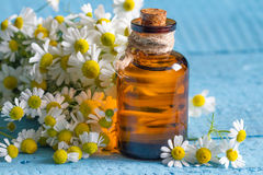 Oil of chamomile with the fresh flowers Stock Images