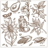 Oil collection of natural ingredients isolated monochrome illustrations. Oil collection of natural ingredients. Exotic avocado, fresh peanut, linen seed, ripe Stock Images