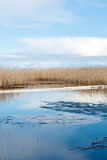 Oil containment boom at a lake after an oil spill. Floating oil containment boom at the shore of a Nordic lake after an oil spill. Small ice rafts melting in the stock photography