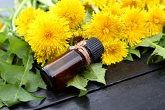 A bottle of oil on a background of yellow dandelion. Oil, dandelion, essential, herbal, background, flower, yellow, medicinal, natural, bottle, summer, fresh royalty free stock photo