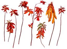 Oil draw illustration of set dry pressed scattered plants with d. Escended, dangling orange leaves, isolated with shadow. Photo manipulation Royalty Free Stock Image