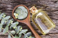 Oil and eucalyptus leaf. Essential oil of eucalyptus leaves is used as a nasal decongestant and to combat respiratory infections stock photos