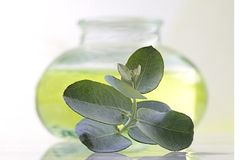 Oil and eucalyptus leave stock photos