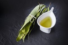 Oil and eucalyptus leaves. On black background Stock Photos