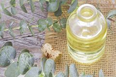 Oil and eucalyptus leaves. On the wooden table Royalty Free Stock Image