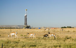 Oil field stock image