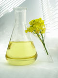 Oil & flower  - rape Stock Images