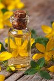 Oil from the flowers of St. John's wort macro vertical Stock Image