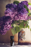 Oil from the fragrant flowers of lilac Royalty Free Stock Images