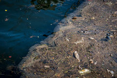 Oil and garbage pollution in the water. Stock Image