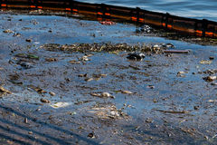 Oil and garbage pollution in the water. Stock Images
