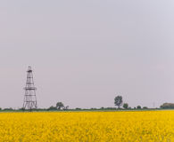 Oil and gas well rig, outlined rural canola field Royalty Free Stock Photography