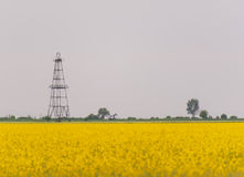 Oil and gas well rig, outlined rural canola field. Oil and gas well rig , outlined on rural canola field, on an overcast day Royalty Free Stock Photography