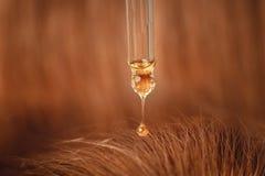 Oil hair treatment for woman. Concept hairdresser spa salon.  stock photography