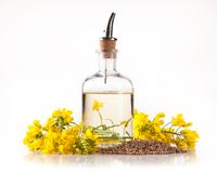 Oil. Isolated rape oil with blossoms on white background Royalty Free Stock Photography