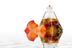 Oil lamp and rose petals with water Stock Photography