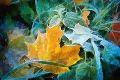 Oil maple leaves Stock Photos