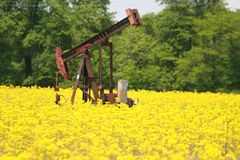 Oil nd Nature 2019. Highland Productions LLC   Darren Dwayne Frazier    I was in Southern Illinois when I saw these oil wells surrounded by yellow flowers. The stock photos