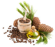 Oil, nuts and cones of cedar tree Royalty Free Stock Photography