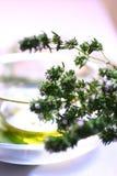 oil nya leaves för basilika olivgrön Royaltyfria Bilder