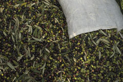Oil and olives Cilento. Campania. Aquara (It). Extra virgin oliv Royalty Free Stock Photo