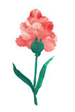 Oil painted flower royalty free illustration