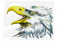 Oil painting bird eagle head Royalty Free Stock Image