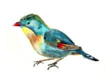 Oil painting bird. On paper Stock Photos