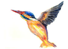 Oil painting bird. On paper Royalty Free Stock Photo