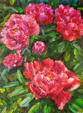 Oil Painting - Blooming Peony Stock Images