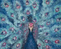 Oil painting on canvas of portrait of a blue and pink peacock, colored bird, fantasy