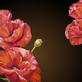 Oil painting. Card with poppies flowers Stock Photography