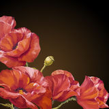 Oil painting. Card with poppies flowers Royalty Free Stock Photography