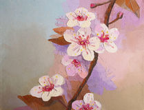 Oil painting Cherry Blossom Flowers Royalty Free Stock Image