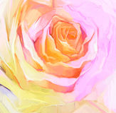 Oil Painting Close up of white rose.  Hand Painted petals floral. Still life of white color flower, create image in soft  pink and yellow color Royalty Free Stock Photos