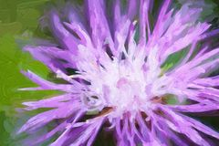 Oil painting Cornflower on a green meadow royalty free stock photo